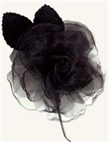 Milliner's Blooms (Black Organza Rose)