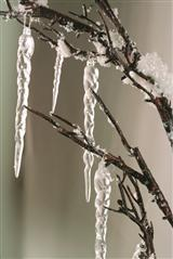 DECEMBERS TEARS DECORATIVE BRANCH