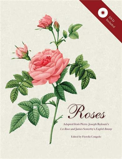 ROSES- MINI ARCHIVE WITH DVD
