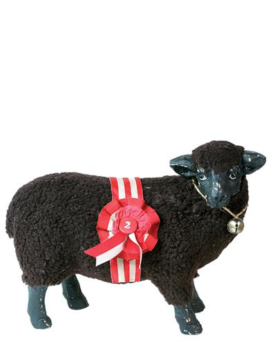 BLACK CORRIEDALE SHEEP