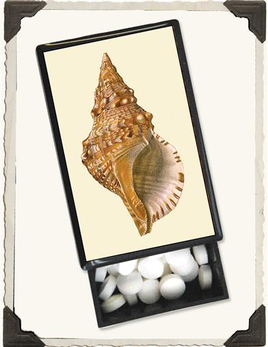 SEASHELL SLIDE BOX WITH MINTS