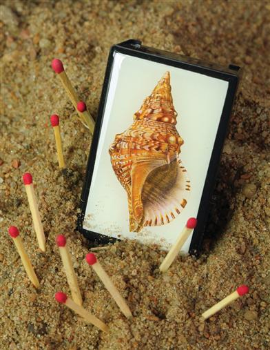 SEASHELL SLIDE BOX WITH MATCHES