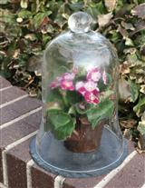 BELL JAR ON SLATE BASE