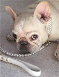Opulent Pet Leash