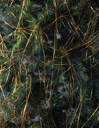 Golden Christmas Cobwebs Tinsel
