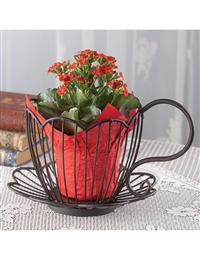 Tea Cup Plant Holder
