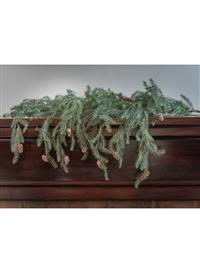 Weeping Evergreen Bough