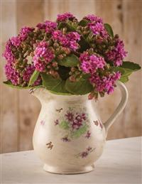 Purple Kalanchoes In Ceramic Pitcher
