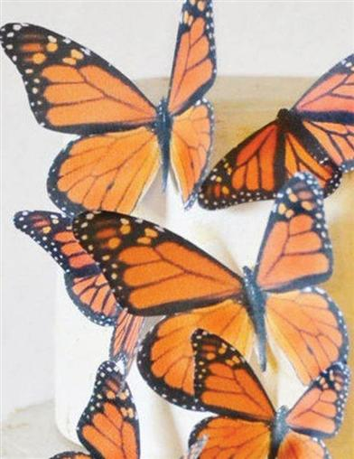 Edible Monarch Butterflies (Set Of 15)