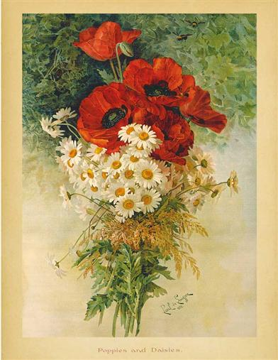 POPPIES & DAISIES PRINT (UNFRAMED)