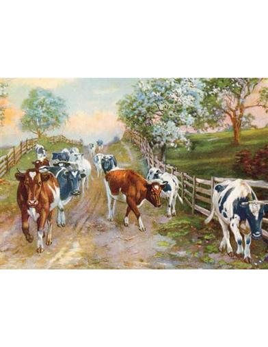 Cows (Pkg Of 6 Anniversary Cards)