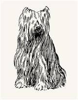 SHAGGY PUP RUBBER STAMP