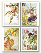 FLOWER FAIRIES (PKG OF 8 NOTECARDS)