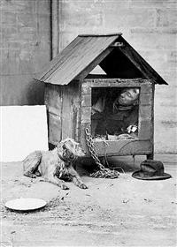 Humorous/dog House/single